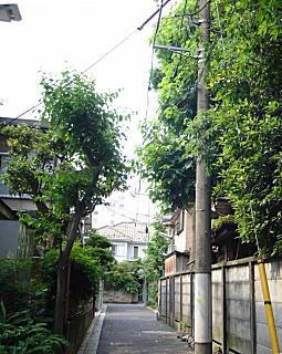 もとゆい工場への道.JPG