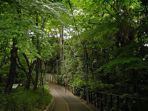 オバケ道.JPG