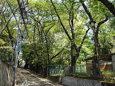 カルガモ坂1.JPG