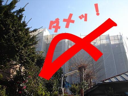 タヌキの森1.jpg