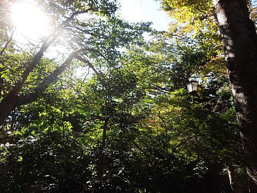 下落合の森.JPG