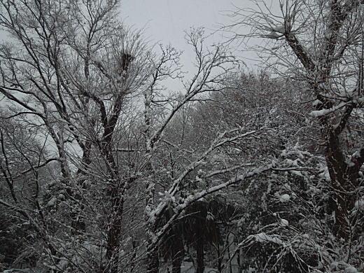下落合の雪景色.JPG