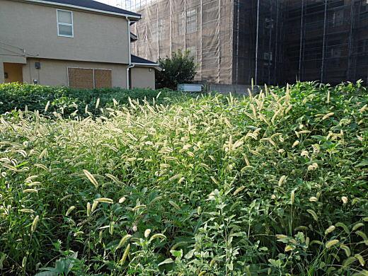 九条武子邸跡1.JPG