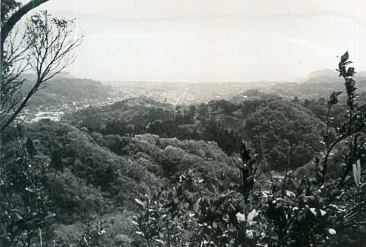 天園ハイキングコース19640425.jpg