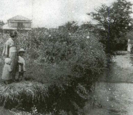 妙正寺川1927頃.jpg