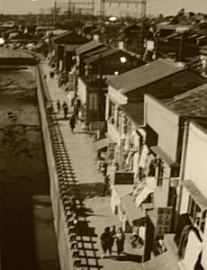 妙正寺川1955.JPG