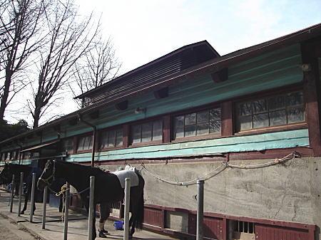 学習院厩舎1.JPG