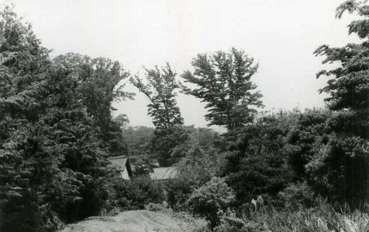小金井ハケの道1974.jpg