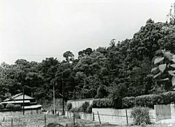 小金井ハケの道3_1974.jpg