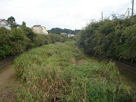 小金井野川.JPG