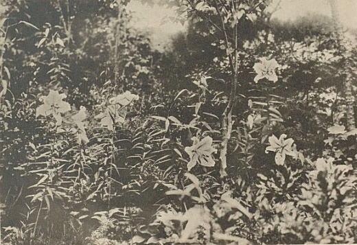 岡不崩「万葉集草木考」1932-34(建設社).jpg