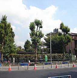 戸山ヶ原諏訪通り.JPG