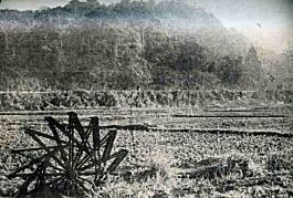 早稲田田圃1900.jpg