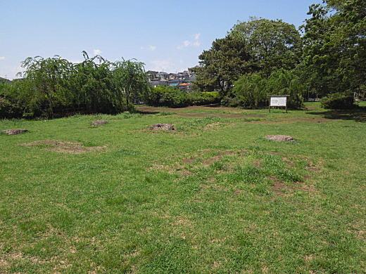 武蔵国分寺跡2.JPG