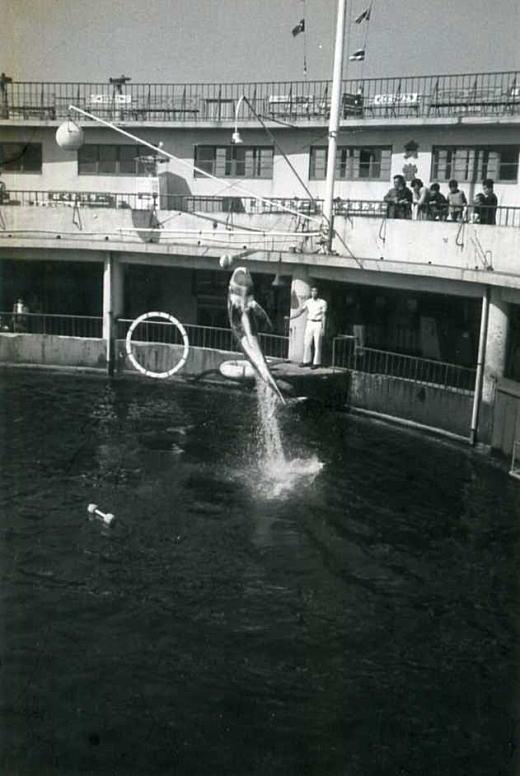 江の水19641011.jpg