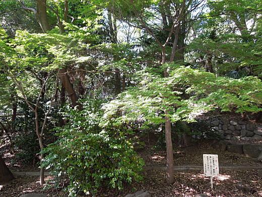 江戸川公園.JPG