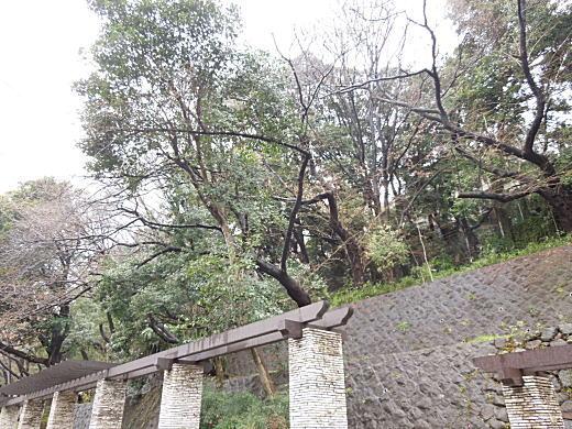江戸川公園1.JPG