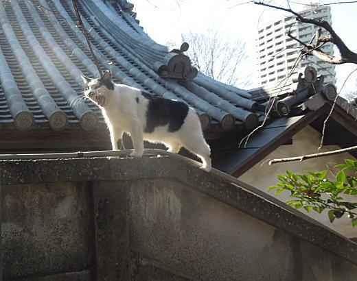 法明寺ネコ.JPG