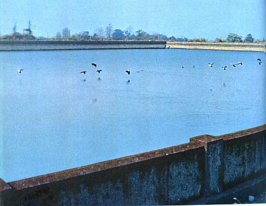 淀橋浄水場沈澄池1966.jpg