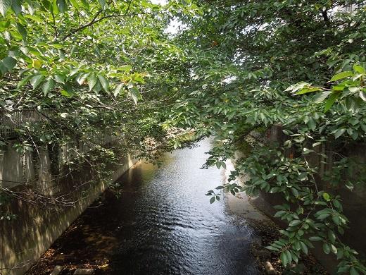 滝沢橋から下流.JPG