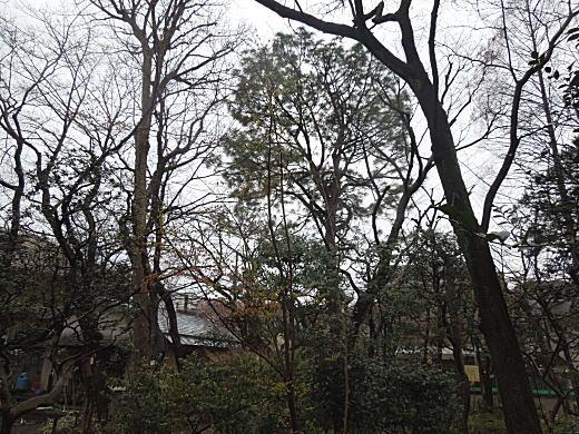 牧野富太郎邸庭.JPG