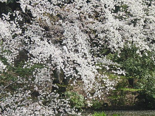 甘泉園3.JPG