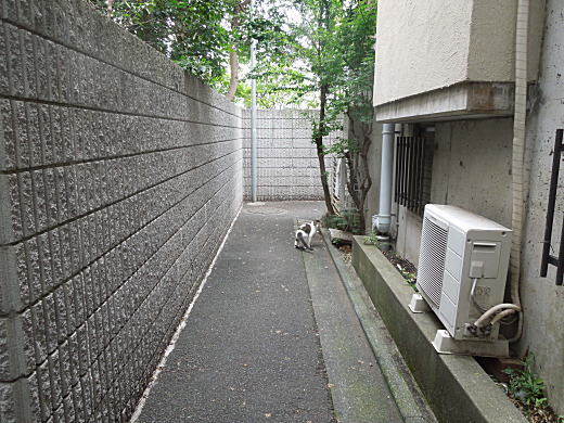 目白林泉園庭球部3.JPG