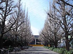 神宮外苑2.jpg