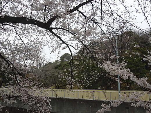 神田川(目白崖線).jpg