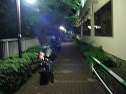 神田川遊歩道.jpg