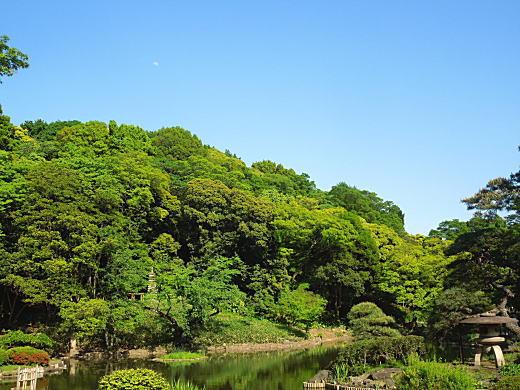 肥後細川庭園(新江戸川公園).JPG