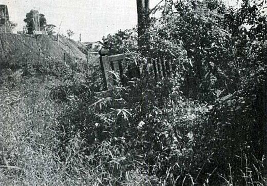 藤稲荷1955_2.jpg