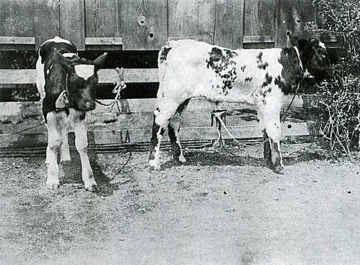西巣鴨保里牧場1913頃.jpg