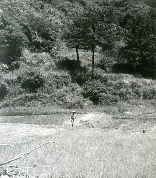 谷の水田.jpg