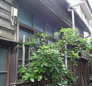 貸家建築(昭和初期).JPG