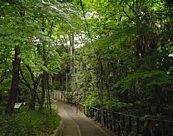 野鳥の森1.JPG