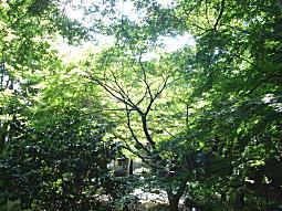 野鳥の森2.JPG