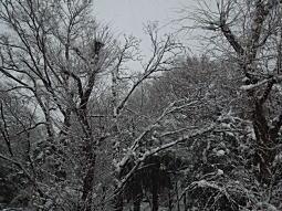 雪の下落合2.JPG