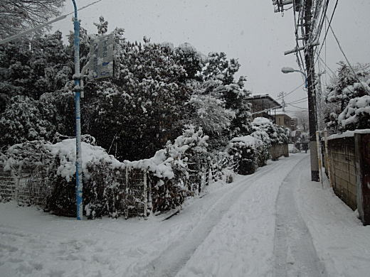 雪の下落合4.JPG