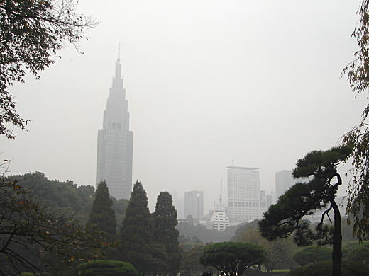 霧の新宿御苑.JPG