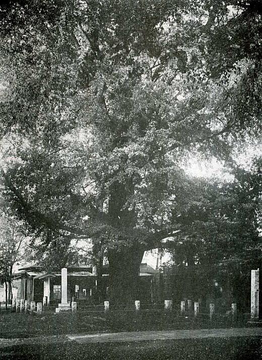 鬼子母神境内1933.jpg